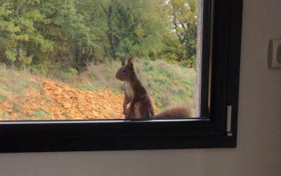 Tic l'écureuil